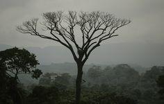 Uma equipa britânica de cientistas descobriu uma nova espécie de galagos anões, um primata pertencente à família dos galonídeos - comum na África subsariana -, na floresta ameaçada da Kumbira, localizada na província do Cuanza Sul, noroeste de Angola. Scientists, Woodland Forest, The World, North West