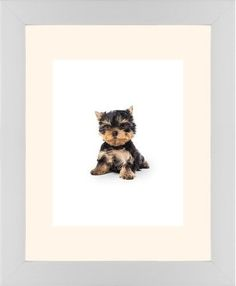 Terrier Puppy Framed Print, White, Contemporary, None, Cream, Single piece, 11 x 14 inches