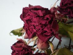 Dried roses from my garden via driedflowercraft.co.uk