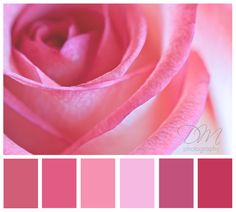 Pink Color Scheme watermelon-inspired color palette of pinks, reds, and green