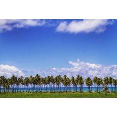 """O muro da minha casa são os coqueiros""   @diegonigrofoto  Use #PernambucoLovers  #praia #beach #semfiltro #nofilter #paiva #itapuama #reservadopaiva #summer #cool #photooftheday #picoftheday #nature #naturelovers #pernambuco #nordeste #brasil #nordestebrasileiro #nordestepraiano #praiasdepernambuco #nordestegram #queridoverao #paradise #amazing #vacation #beautiful #love #viagem #turismo #turistando by pernambucolovers"