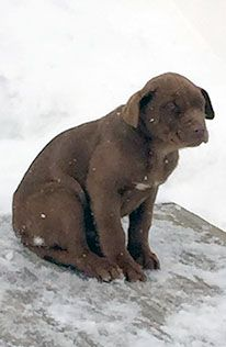 Help save dogs from the cold