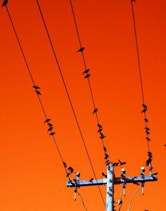 mlsg:  Networking
