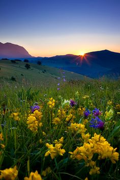Beautiful field of spring flowers in Italy | Brian Jannsen Photography