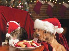 Dog Christmas Cards  Cat Christmas Cards