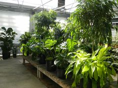 Collier S Nursery Vestavia Al Offers An Excellent Selection Of Houseplants Including Some