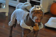 ferocious Pit Squirrel