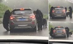 Terrifying moment black bear violently shakes a car at a Chinese zoo