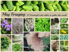 31 Wild foods to forage in May