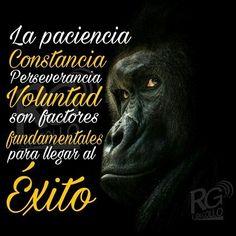 La #paciencia, #constancia, #perseverancia, #voluntad, son factores fundamentales para llegar al #Éxito . #frases #reflexiones #vida #goodmorning #work