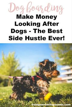 Make extra money with this fun side hustle: http://www.frompenniestopounds.com/love-animals-heres-money-making-idea/