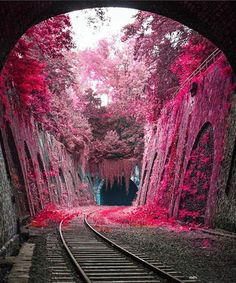 Beautiful landscapes - La Petite Ceinture an abandoned railway line circling Paris × Nature Pictures, Cool Pictures, Beautiful Pictures, Beautiful Nature Wallpaper, Beautiful Landscapes, Natur Wallpaper, Hd Wallpaper, Landscape Photography, Nature Photography