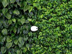 Koubachi gardening sensor   FUTU.PL