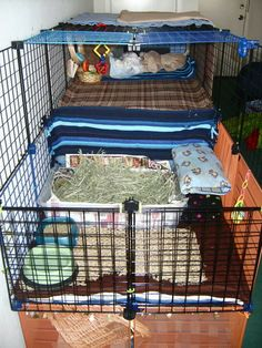 some of my rabbit cage set ups, I like to change it around Cuddles, Guinea Pigs, Bunnies, Rabbit, Change, Pets, Bunny, Rabbits, Animals And Pets