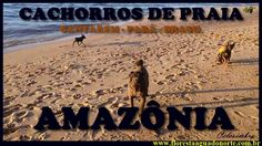 Amazônia - Animal Doméstico - Cachorros de Praia -  Celcoimbra - FAN