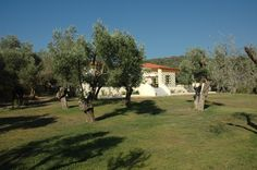 View of the Gera's Olive Grove ESTATE Lodges, Acre, Natural Beauty, Greece, Island, Traditional, Landscape, Plants, Greece Country