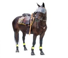 Police horse ready for duty wearing riot gear, you dont need fuel for this ride