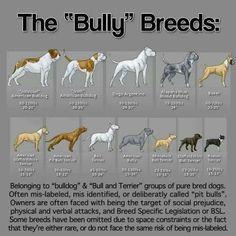 Bully breed