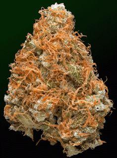 Multiple strains!!
