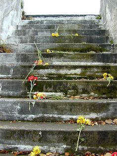 photo of concrete stairwell and flowers