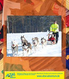Die Huskies sind los…Ihr könnt euch nichts Schöneres vorstellen, als mit Hunden im Schnee zu toben und auf einem Hundeschlitten mitzufahren? Dann wird hier euer Traumurlaub wahr. Bei den Schlittenwanderungen begebt ihr euch mit echten Alaska- und Sibirian Huskys auf eine spannende Abenteuerreise durch die verschneiten Wälder der Böhmischen Schweiz.   pinned by an  www.altai-adventure.de   Follow us on www.facebook.com/AltaiAdventure#!/AltaiAdventure