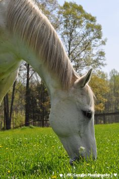 These Horses aren't Camera Shy Camera Shy, Horse Ranch, Horses And Dogs, Ranch Life, Horse Stuff, Jet, Photography, Animals, Photograph