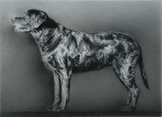 Cola. Black Chalk and Pencil drawing. Paul Emsley.