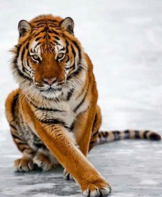 <3 <3 Magnifique <3 <3 #Zoology #Animal
