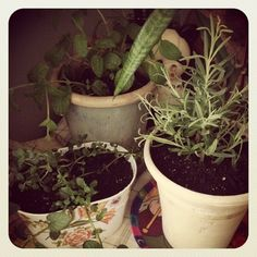 Freshly potted lavender & mint makes #citylifelivable (Taken with instagram)
