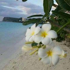 Mahalang yu... Guam Beaches, Island Life, Beautiful Islands, Sweet, Photos, Baby, Mariana, Candy, Pictures