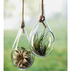 ガラスの中の小さな世界「テラリウム」でお部屋に癒しを♡|マシマロ