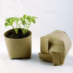 Semis dans des rouleaux de papier toilette - Photo : Stacie / CC Flickr
