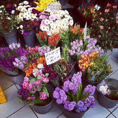 Tulips and hyachints, High Street Kensington Station, London