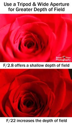 Tips for Macro Photography: Wide Aperture for Greater Depth of Field | Boost Your Photography