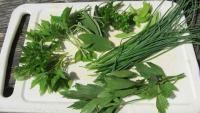 Die Wirkung der 9 beliebtesten Küchenkräuter nach TCM – von Basilikum bis Thymian