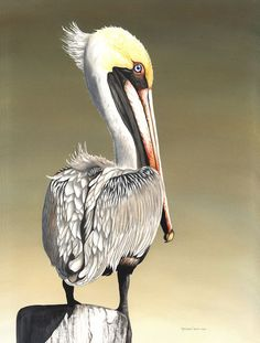 Pelican Perching - Christine Reichow Watercolor Artist (239) 433-3817    I love this guys eye!