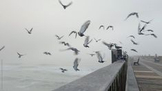 Flying Birds A flock of pigeons taking off for flight from the edge of a fishing pier. Aesthetic Movies, Sky Aesthetic, Beautiful Landscape Wallpaper, Beautiful Landscapes, Aesthetic Photography Nature, Nature Photography, Birds Flying Away, Bird Flying, Beautiful Birds