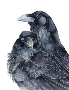 """culturenlifestyle: """" Watercolor Birds II by Karolina Kijak Poland based architect Karolina Kijak (previously featured here) is also a talented illustrator who specializes in watercolor bird portraits. Crow Art, Raven Art, Bird Art, Watercolor Bird, Watercolor Animals, Watercolor Paintings, Watercolours, Watercolor Artists, Watercolor Portraits"""