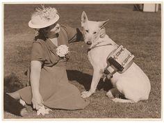 Dog with backpack, 1939. This is police dog, Zoe, with a radio receiving set on her back.