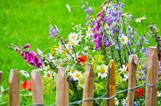 Blühende Gärten, rauschende Feste und gärtnerische Kunstwelten beim gartenFESTWOCHENtulln. Tulln ist schöner! #Gartensommer ©gFWt/Marmel; Natur im Garten/G. Hüfing