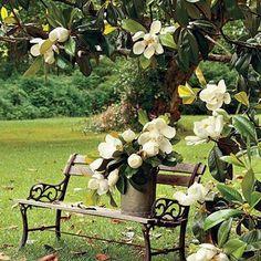 Pretty bench under the magnolia tree....