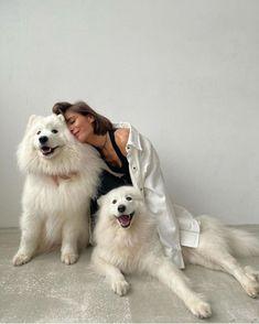 Animals Images, Cute Animals, Pet Dogs, Dog Cat, Animal Hugs, Wolf Husky, Husky Husky, Pet Hotel, Pose