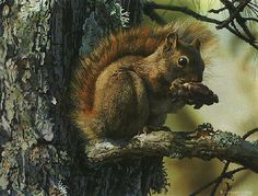 Carl Brenders - Picnic Perch - Search Gallery One for Brenders limited edition prints, giclee canvases and original paintings by internationally-known artists Wildlife Paintings, Wildlife Art, Animal Paintings, Wild Life, Scratchboard Art, Pet Mice, Nature Animals, Small Animals, Wild Animals