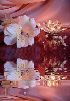 Vida tremulante como a flor.
