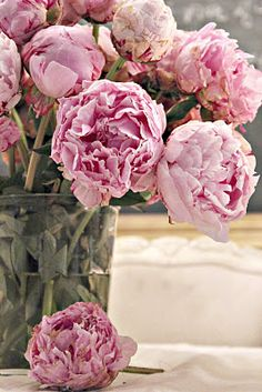 Peonies pretty ruffled petals  sweet blush color  an intoxicating scent...