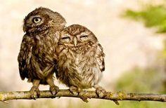 Owl you need is love    #animal #love #photography