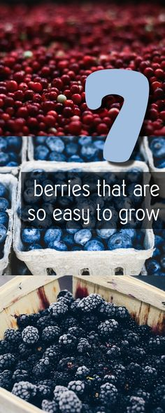 makingdiyfun.com 7-berries-that-are-so-easy-to-grow