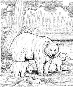 American Black Bear Family Coloring Page From Bears Category Select 20946 Printable