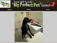 """""""I was fixing my hair in the bathroom and hes always in there with me being nosey LOL."""" - Share your pet's photo for a chance to win a chance to win one of 7 beautiful photo gifts!  Submit their photo here http://www.myperfectpetcontest.com  and for more great ways to showcase your photo memories visit BlanketWorx"""