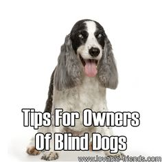 Tips For Owners Of Blind Dogs....my dog Budman was blind in his older years....